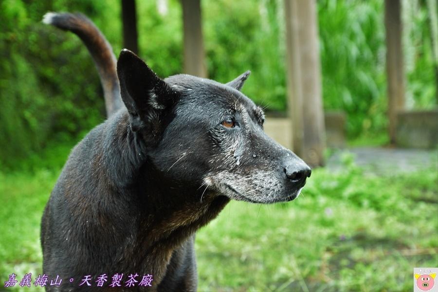 天香製茶廠DSC_2049.JPG