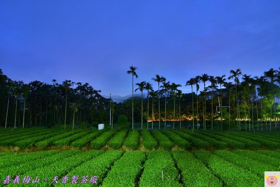 天香製茶廠DSC_2028.JPG
