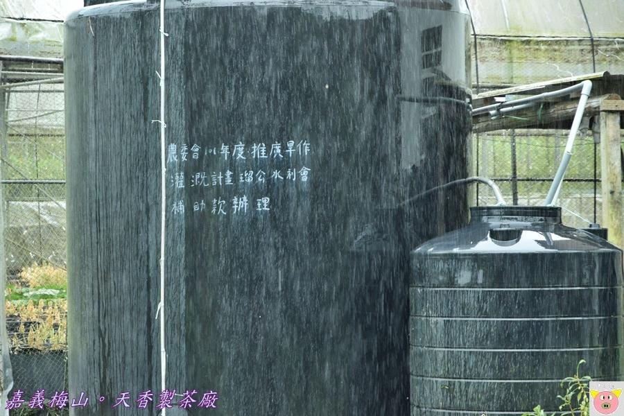 天香製茶廠DSC_2054.JPG