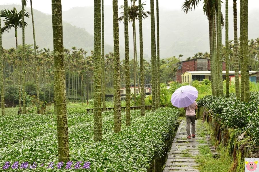 天香製茶廠DSC_2082.JPG