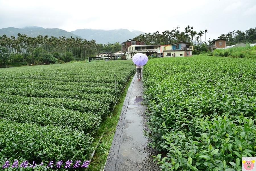 天香製茶廠DSC_2087.JPG