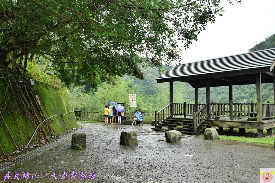 天香製茶廠DSC_2072.JPG