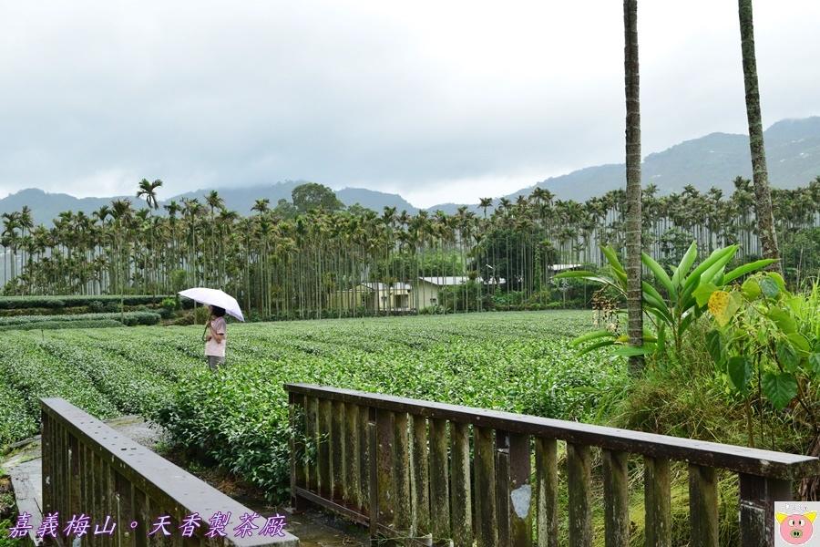 天香製茶廠DSC_2085.JPG