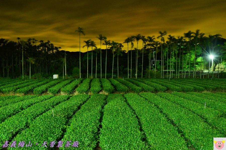 天香製茶廠DSC_2103.JPG