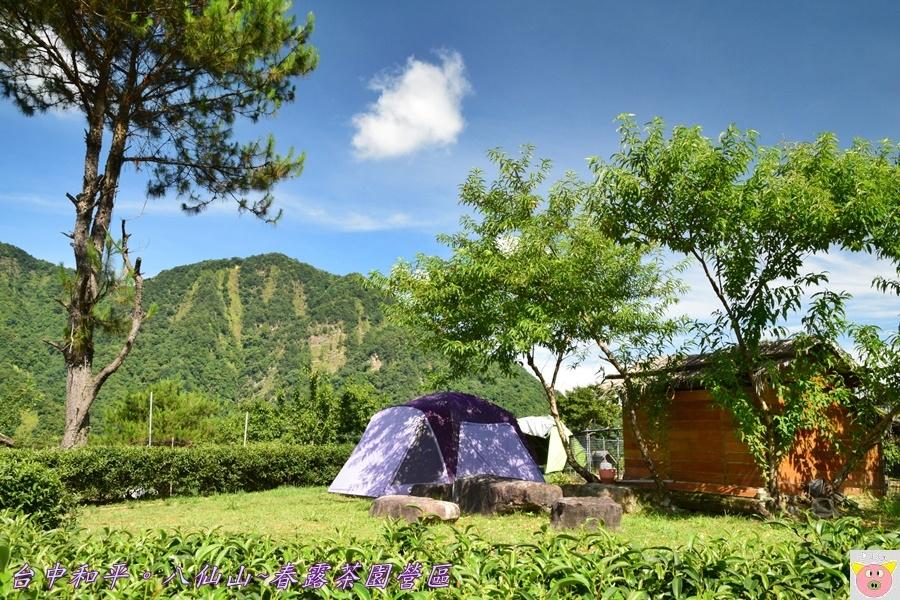春露茶園DSC_2509.JPG