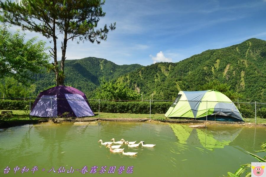 春露茶園DSC_2533.JPG
