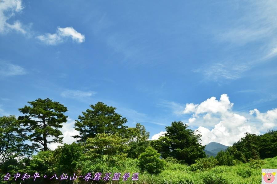 春露茶園DSC_2563.JPG