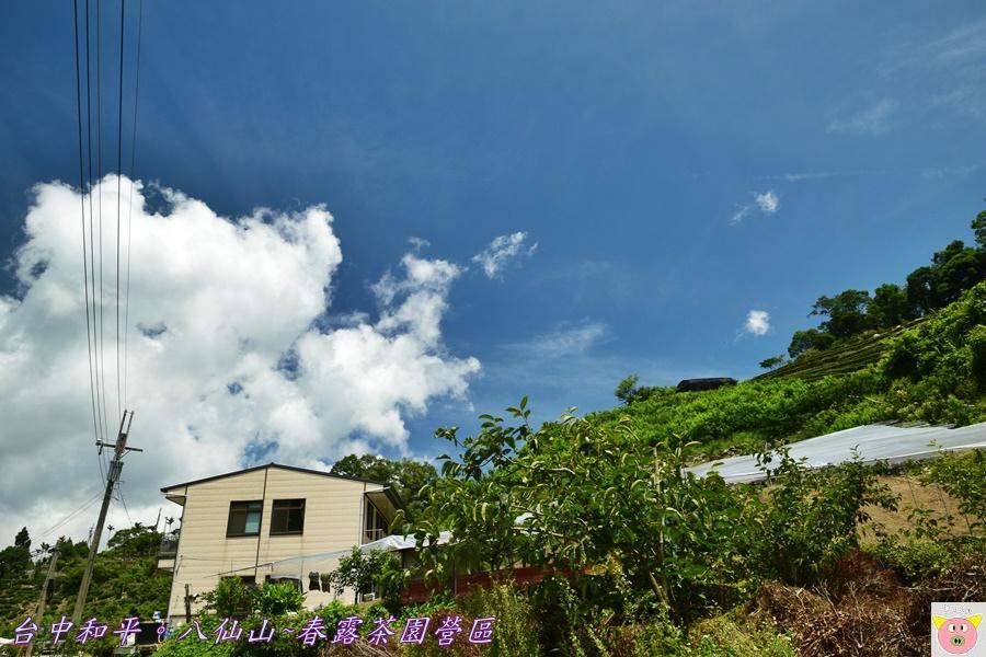 春露茶園DSC_2567.JPG