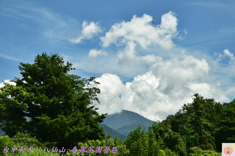 春露茶園DSC_2565.JPG