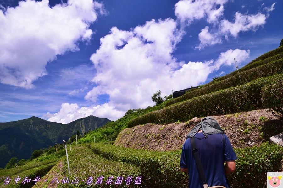 春露茶園DSC_2590.JPG