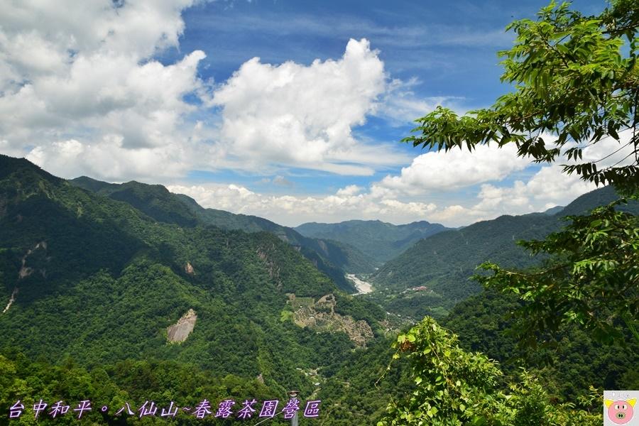 春露茶園DSC_2611.JPG
