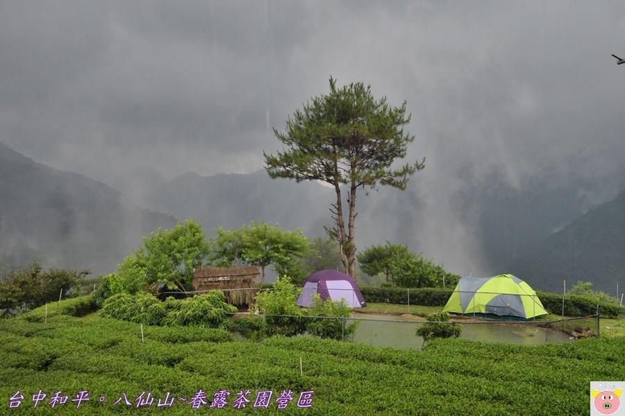 春露茶園DSC_2753.JPG
