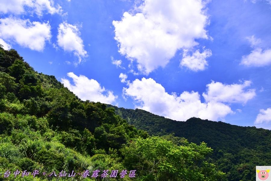 春露茶園DSC_2638.JPG