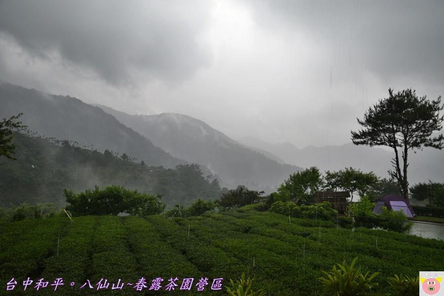 春露茶園DSC_2754.JPG
