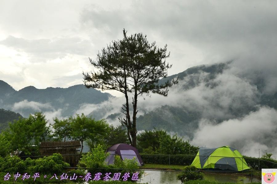春露茶園DSC_2789.JPG