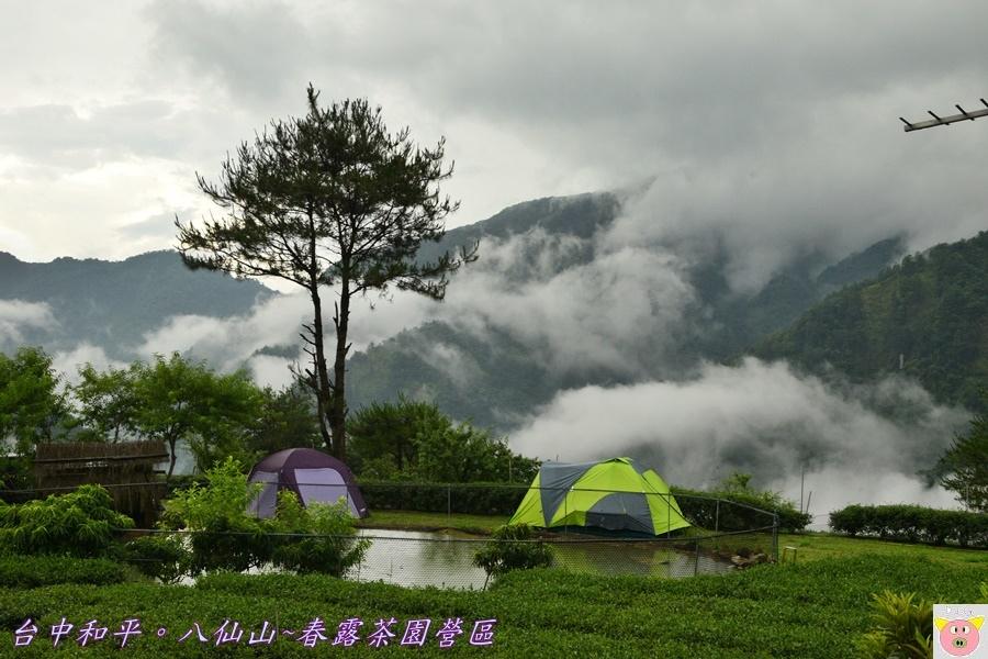 春露茶園DSC_2788.JPG