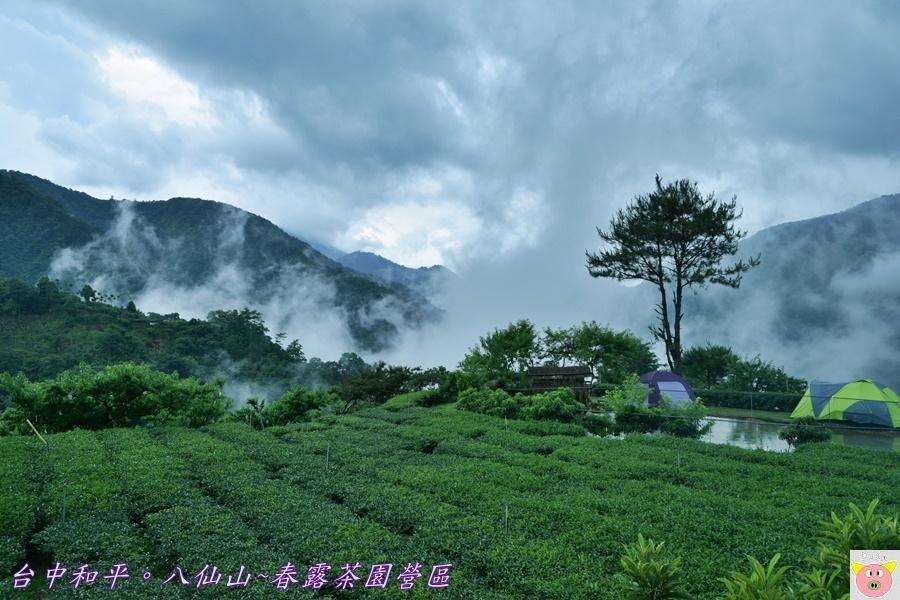 春露茶園DSC_2767.JPG