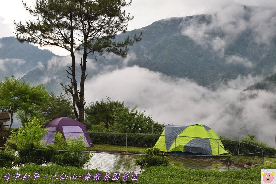 春露茶園DSC_2799.JPG