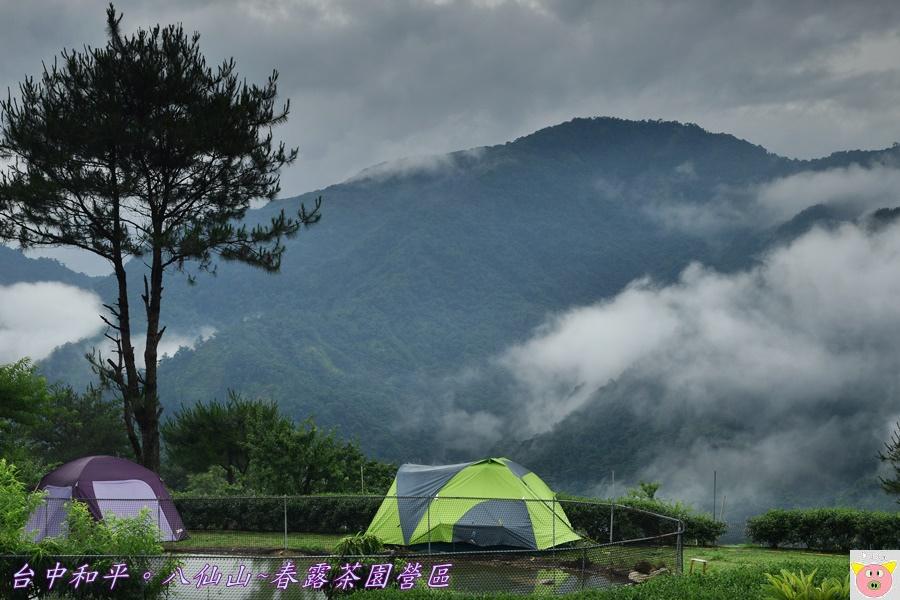 春露茶園DSC_2851.JPG