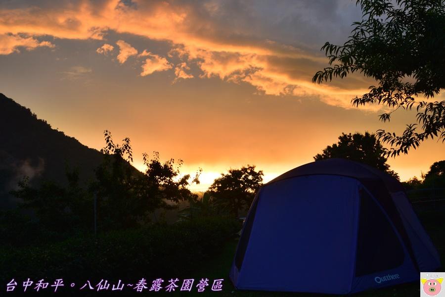 春露茶園DSC_2906.JPG