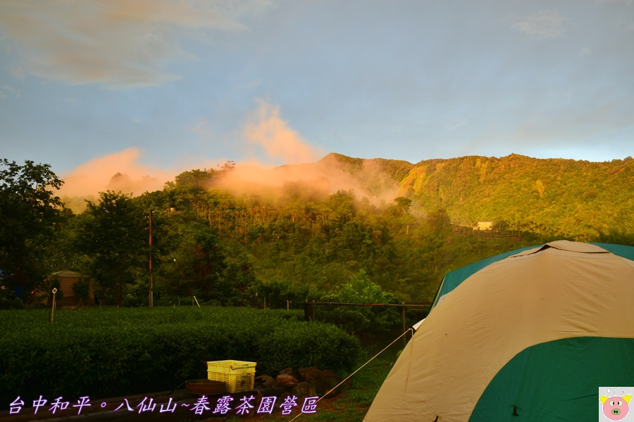 春露茶園DSC_2892.JPG