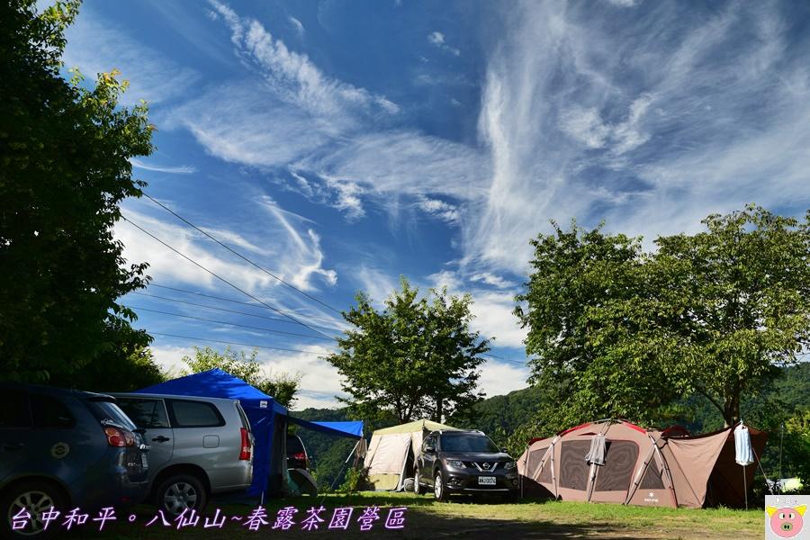 春露茶園DSC_2938.JPG