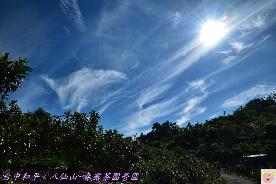 春露茶園DSC_2942.JPG