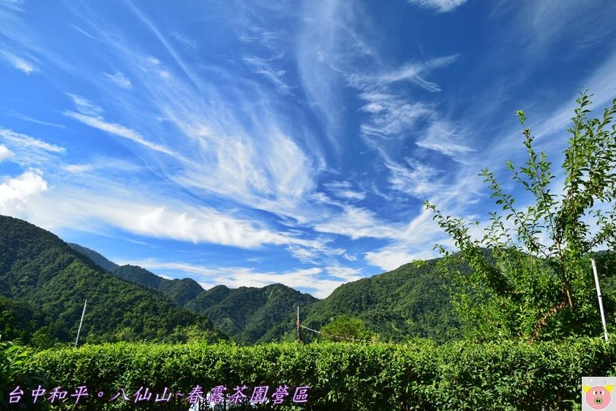 春露茶園DSC_2976.JPG