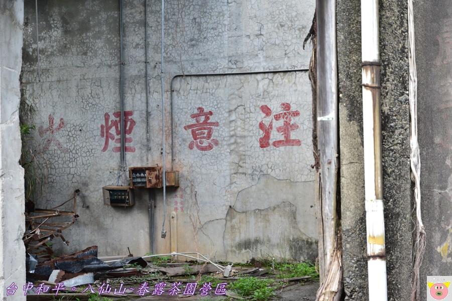 春露茶園DSC_3055.JPG