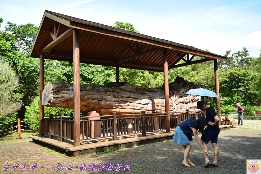 春露茶園DSC_3075.JPG