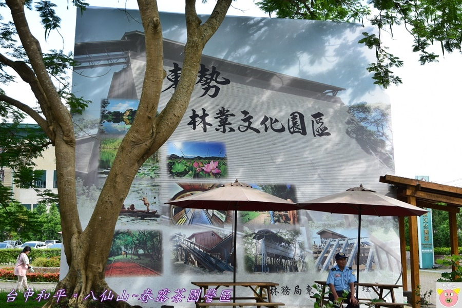 春露茶園DSC_3090.JPG