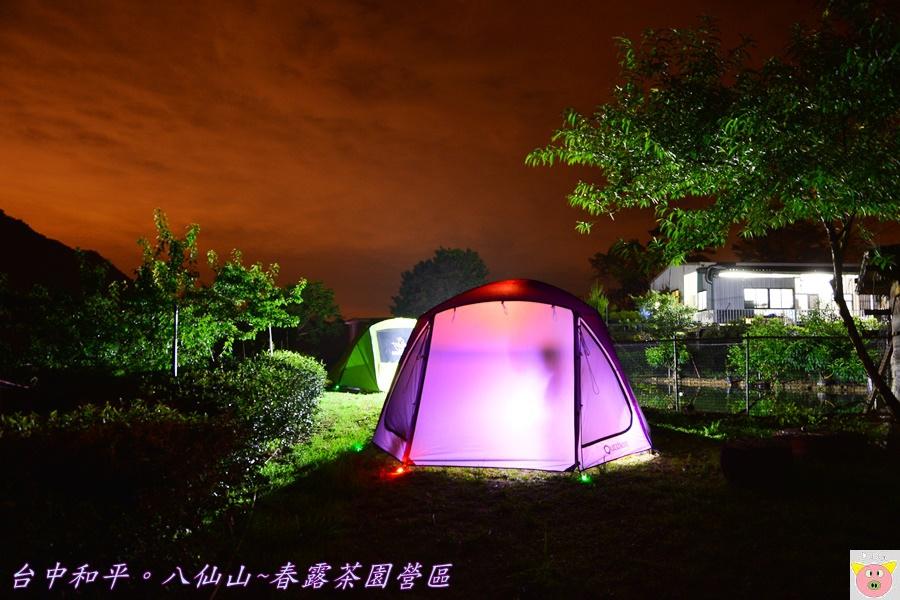 春露茶園DSC_2476.JPG