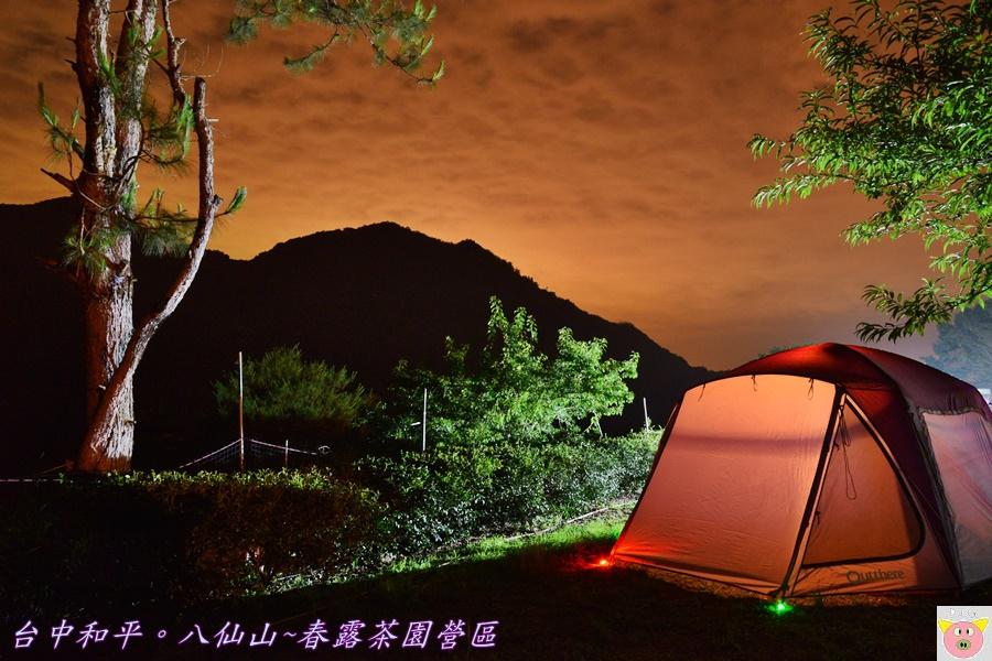 春露茶園DSC_2484.JPG
