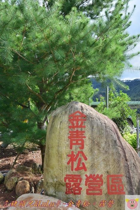 金青松DSC_9307.JPG