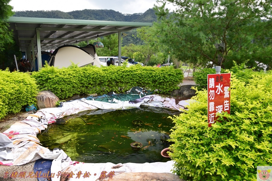 金青松DSC_9318.JPG