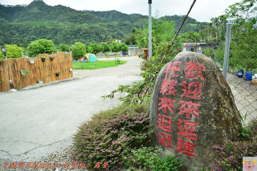 金青松DSC_9356.JPG
