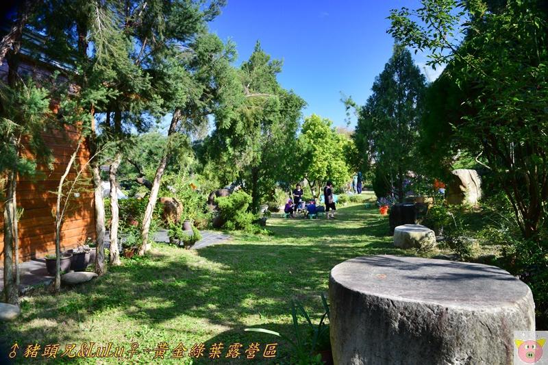 黃金綠葉DSC_0225.JPG
