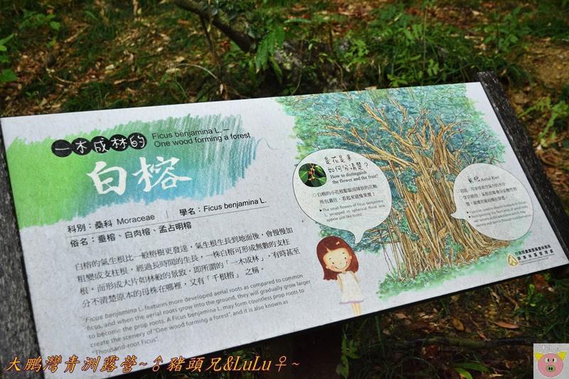 大鵬灣青洲露營DSC_0296.JPG