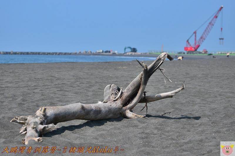 大鵬灣青洲露營DSC_0385.JPG