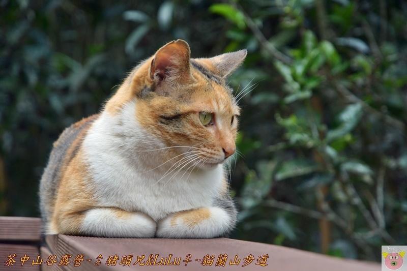 茶中山谷露營DSC_0066.JPG
