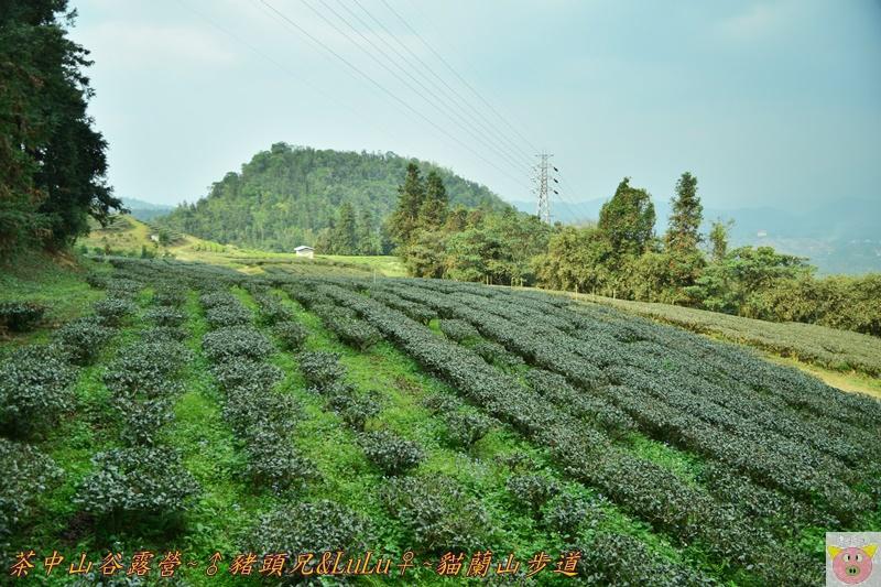 茶中山谷露營DSC_0090.JPG