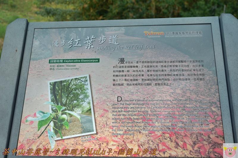 茶中山谷露營DSC_0069.JPG