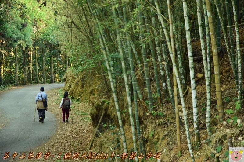 茶中山谷露營DSC_0094.JPG