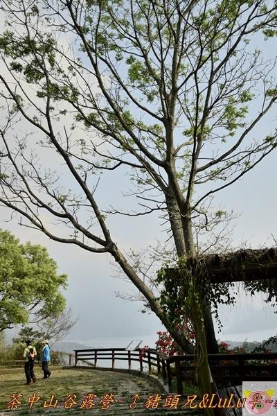 茶中山谷露營DSC_0166.JPG