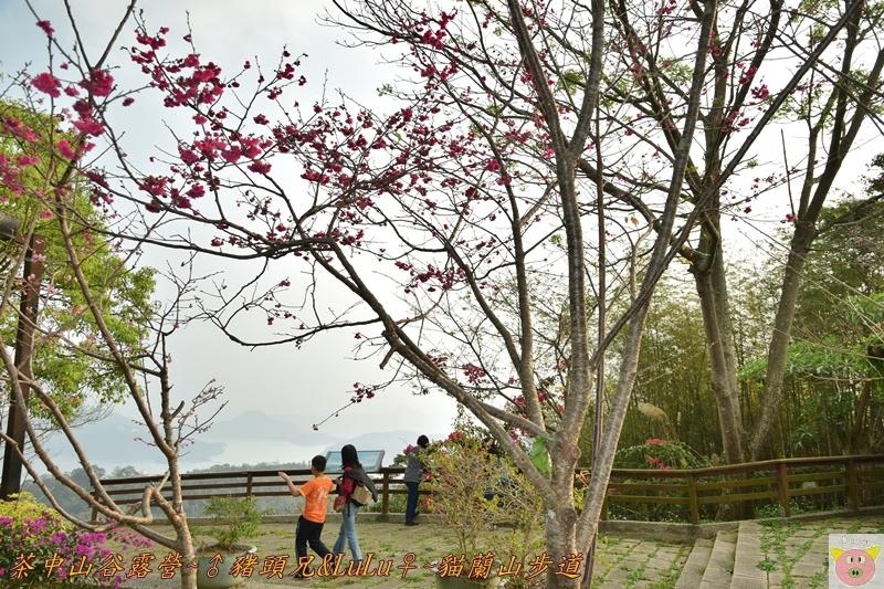茶中山谷露營DSC_0207.JPG