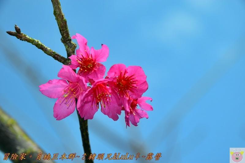 肖楠巨木群DSC_0065.JPG