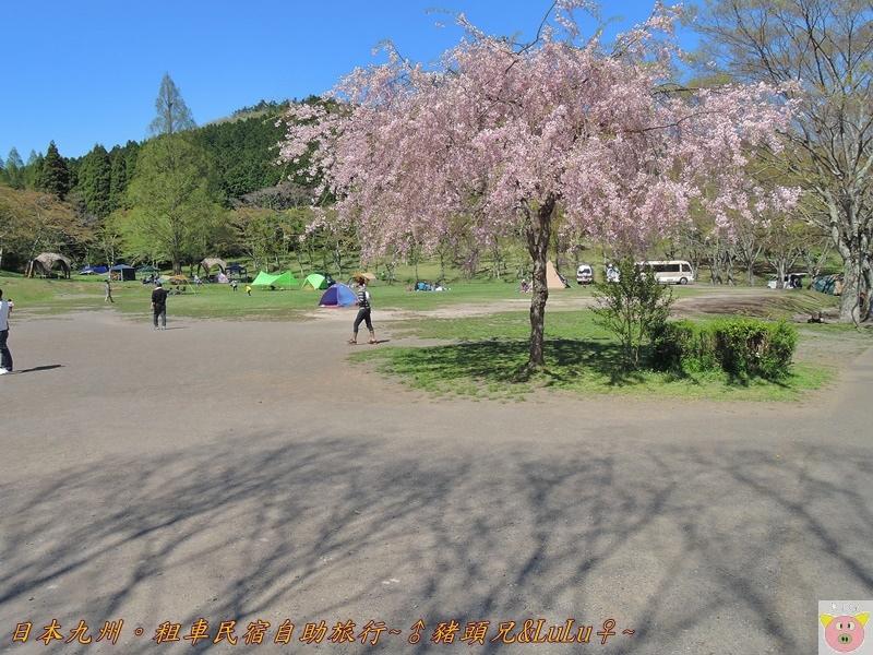 日本九州DSCN8667.JPG