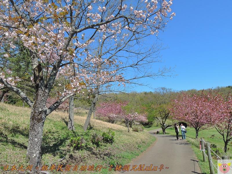 日本九州DSCN8679.JPG