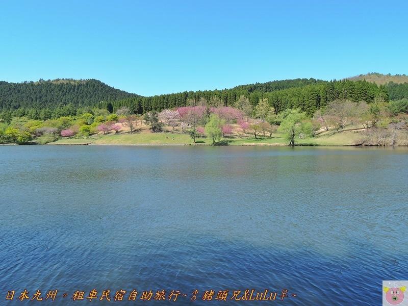 日本九州DSCN8685.JPG