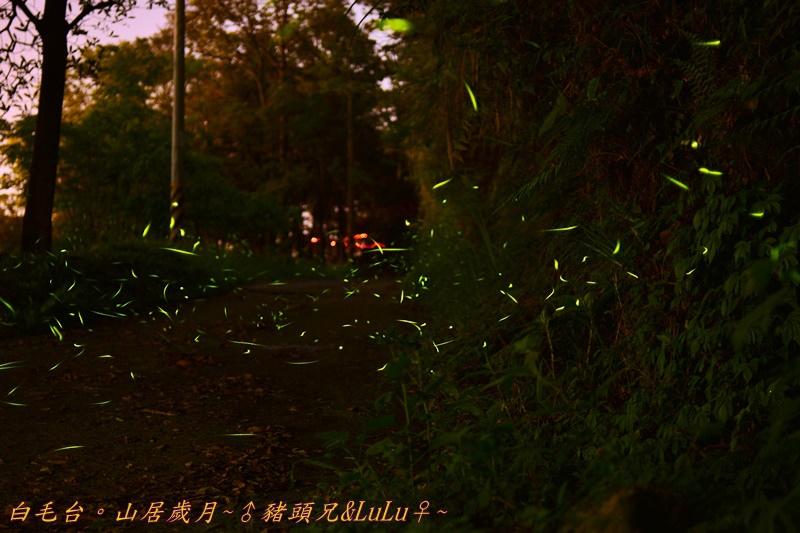 山居歲月DSC_0154.JPG